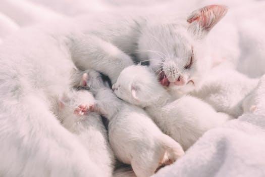 احلى صور للقطط في العالم 3919