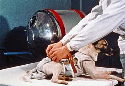 معلومات عن اول حيوان زار الفضاء 398