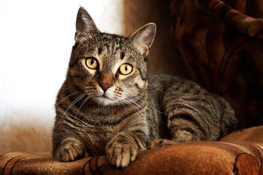 احلى صور للقطط في العالم 4019