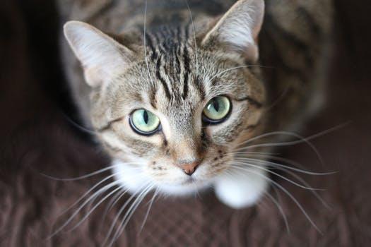 احلى صور للقطط في العالم 4151