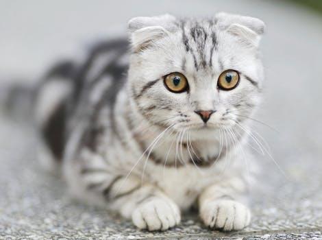 احلى صور للقطط في العالم 4216