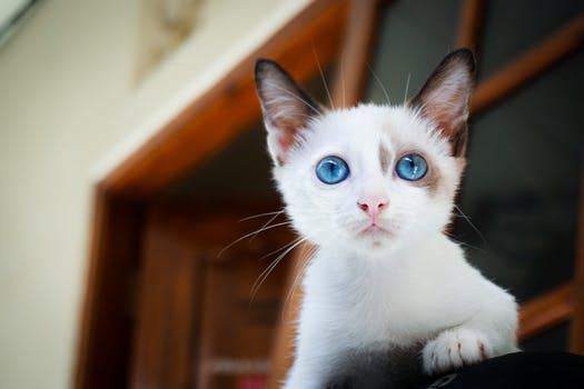 احلى صور للقطط في العالم 4316