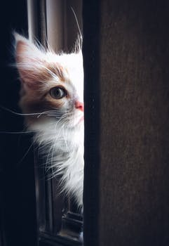 احلى صور للقطط في العالم 4516