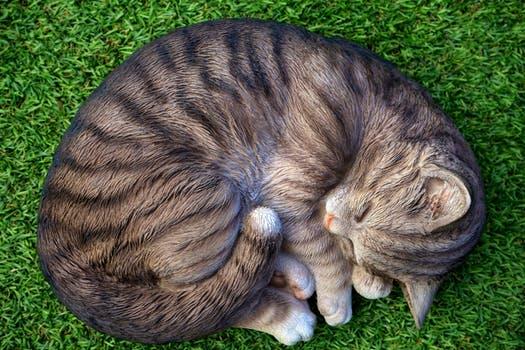 احلى صور للقطط في العالم 4614