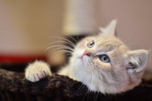 احلى صور للقطط في العالم 4714