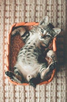 احلى صور للقطط في العالم 4814