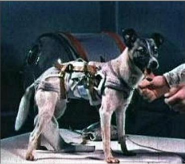 معلومات عن اول حيوان زار الفضاء 490