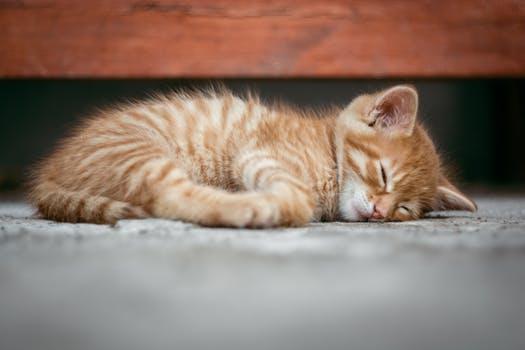 احلى صور للقطط في العالم 4914