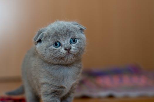 احلى صور للقطط في العالم 5116