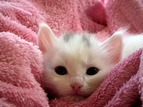 احلى صور للقطط في العالم 679