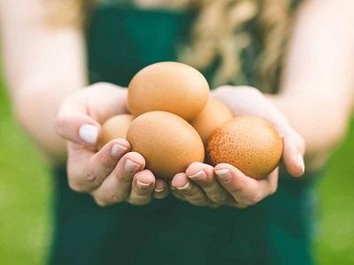 قوة رجيم البيض المسلوق لخسارة الوزن بسرعة 744