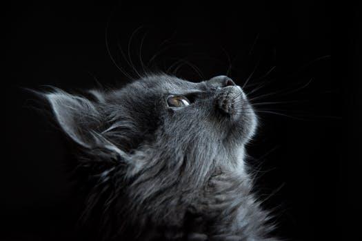 احلى صور للقطط في العالم 765