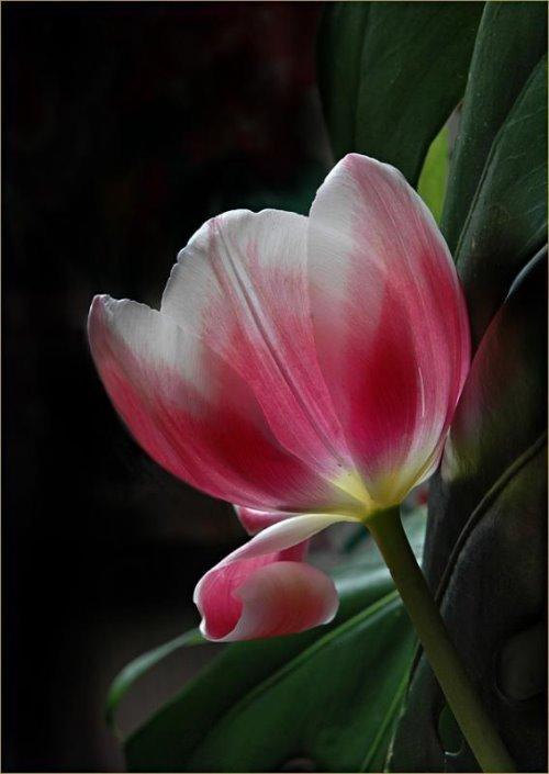 صور احلى وردة في العالم 914