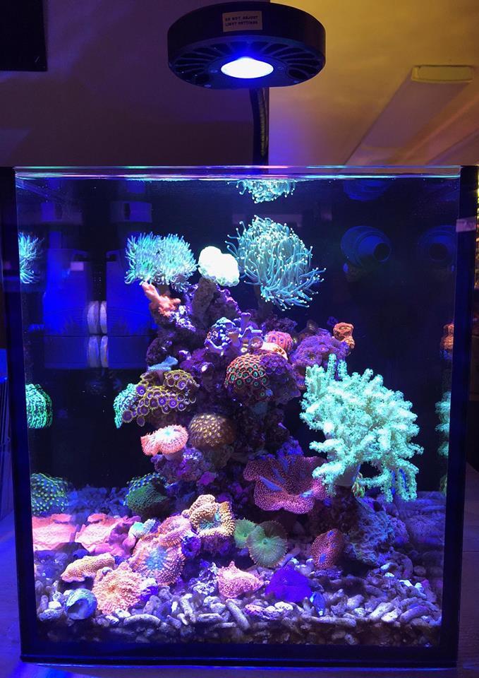 Kessil Light A 80 Tuna Blue 610