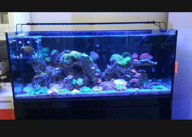 Lampu Aquarium Nemo light 54 watt Screen19