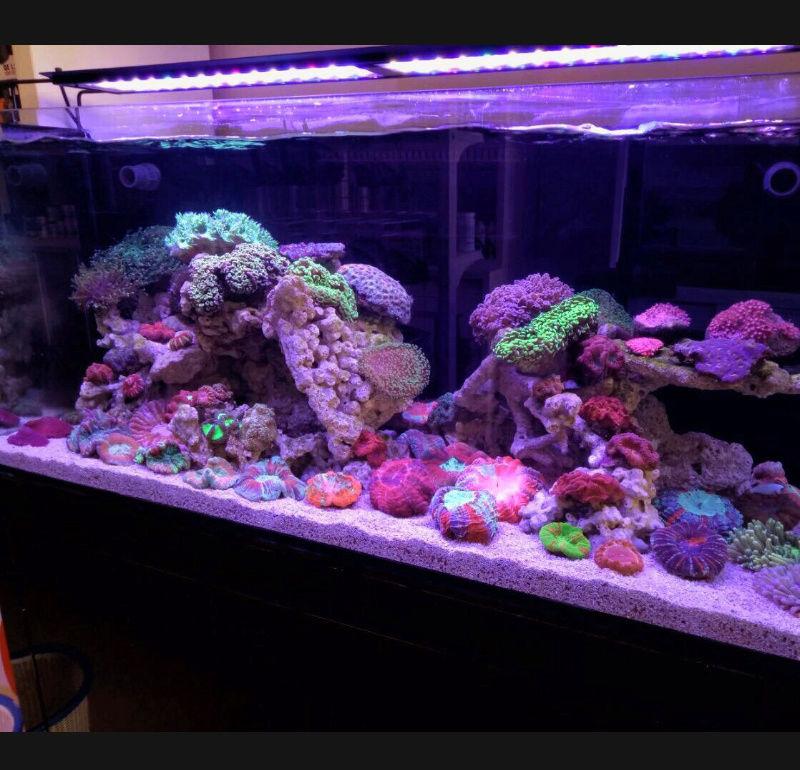 Lampu Aquarium Nemo light 54 watt Screen20