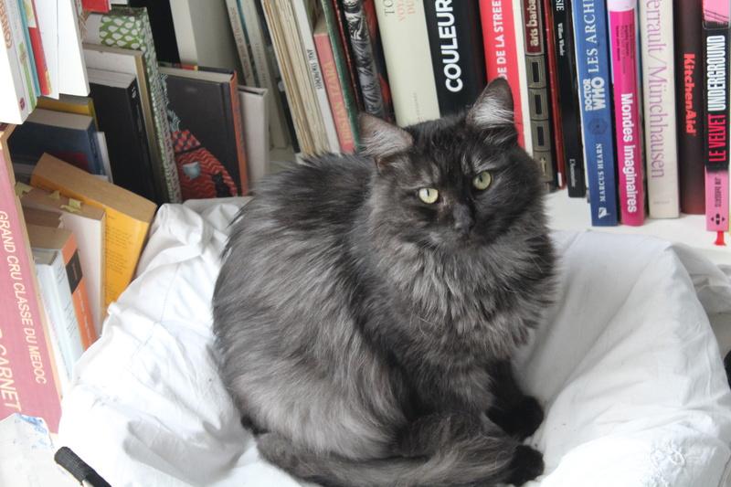 LAWSON, chat européen black smoke poils mi-longs, né en juin 2016 Img_5911