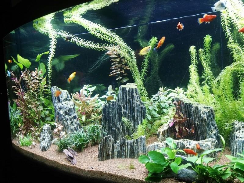 Aquarium Rochnan A10
