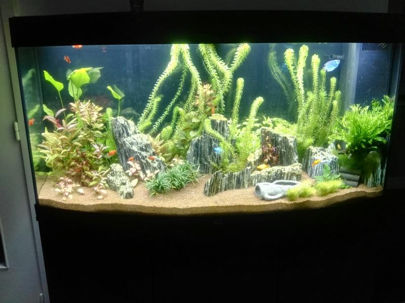 Aquarium Rochnan Aquari10