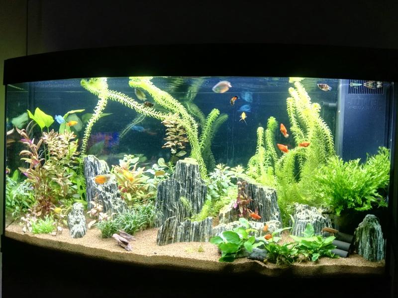 Aquarium Rochnan B10