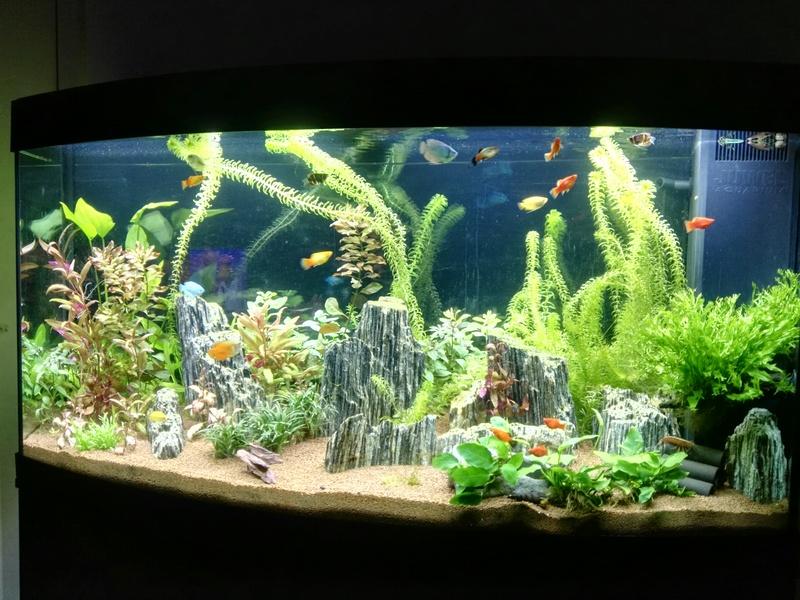 Aquarium Rochnan C10