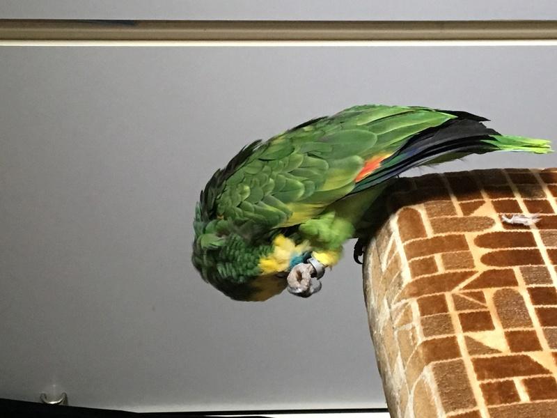 Condividete le foto dei vostri amici animali - Pagina 2 F4315c10