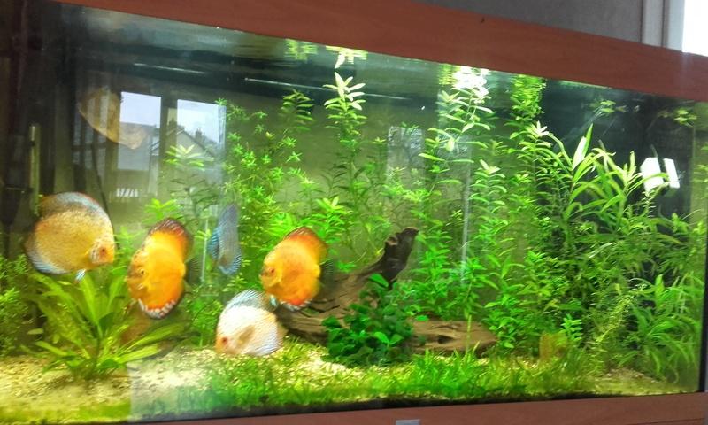 filtres aquarium a discus 20180110