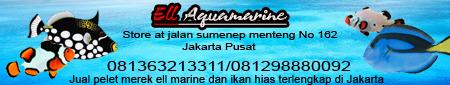 Ell Aquamarine