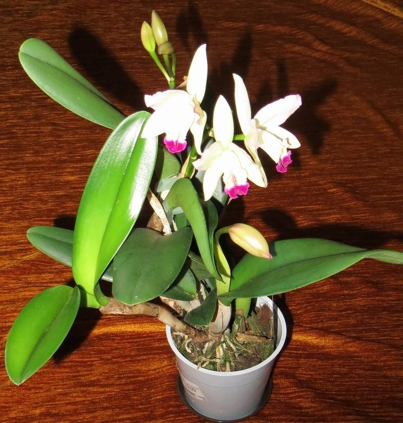 Orchideen-Neuzugang 2 Orch-c10