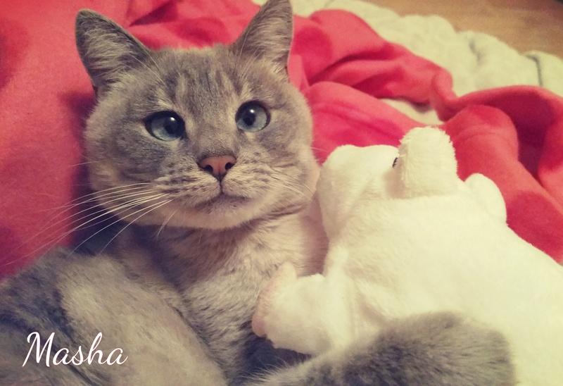 Masha, née le 1er janvier 2014 Masha10