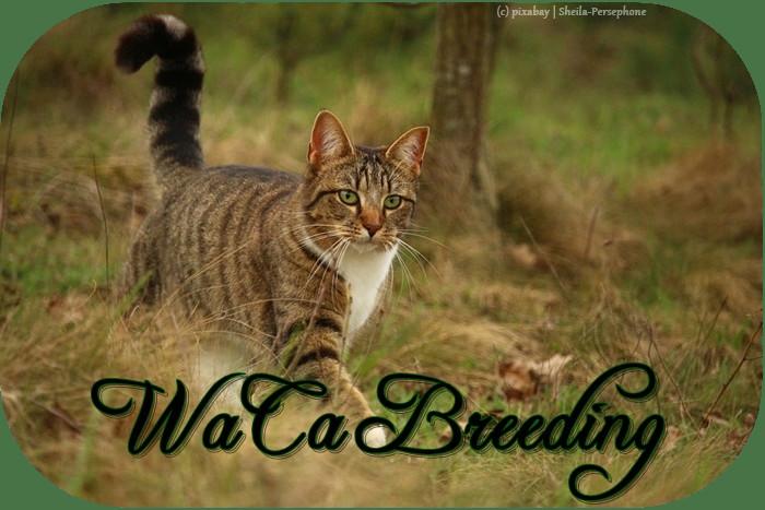 Warrior Cats Zuchtforum