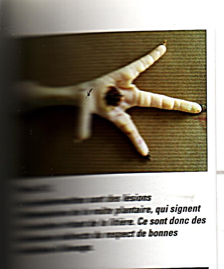 Poule qui ne se leve plus: Paralysée ?? Pourtant pas Marek... - Page 2 Img14