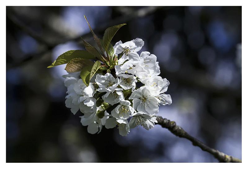 Il arrive le printemps ( suite et fin ) _mg_4512