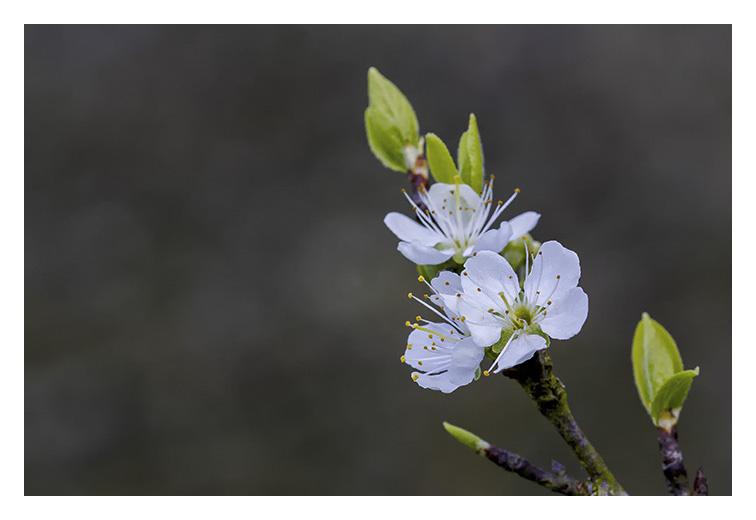 Il arrive le printemps ( suite et fin ) _mg_4513