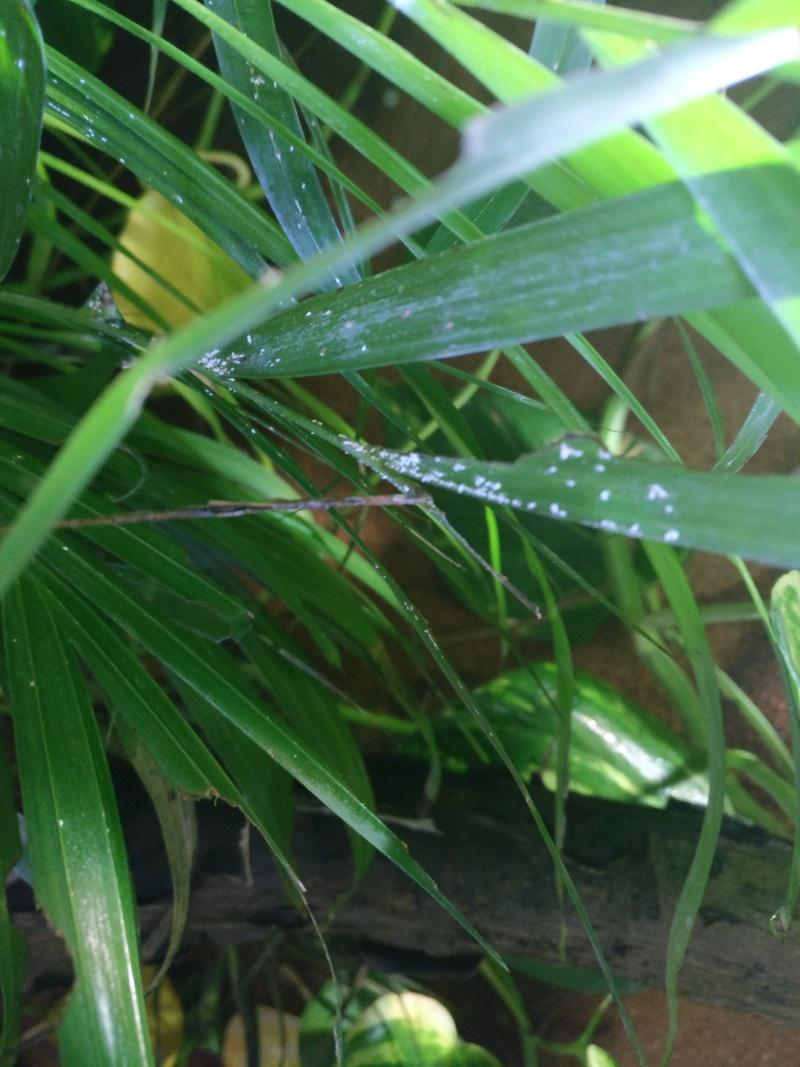 maladie plante Img_2014