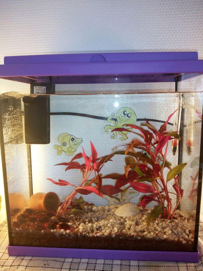 Nouvelle ici et débutante en aquariophilie. Betta Img_2010