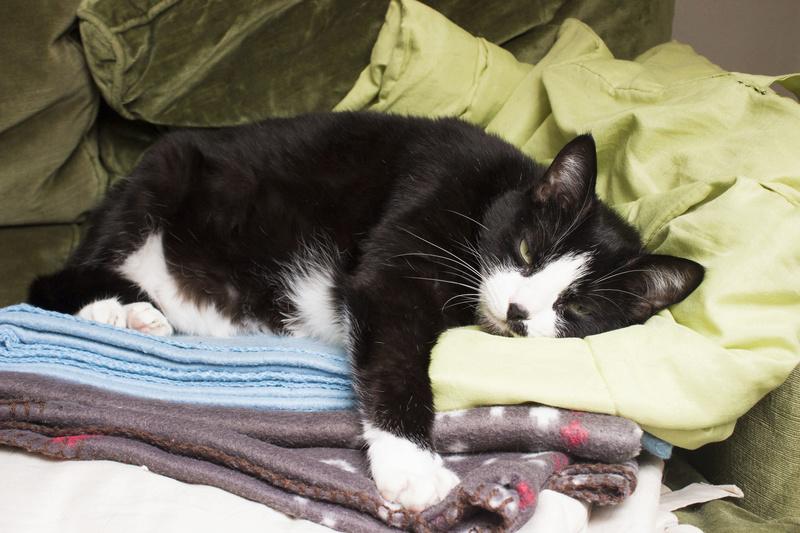 HUNA, chatte européenne Noire&blanche, née en 2012 511