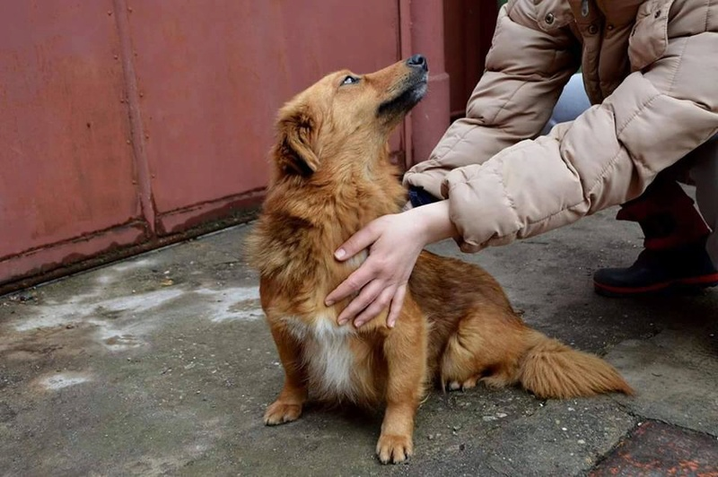 Bella, 4 ans petite taille 32687810