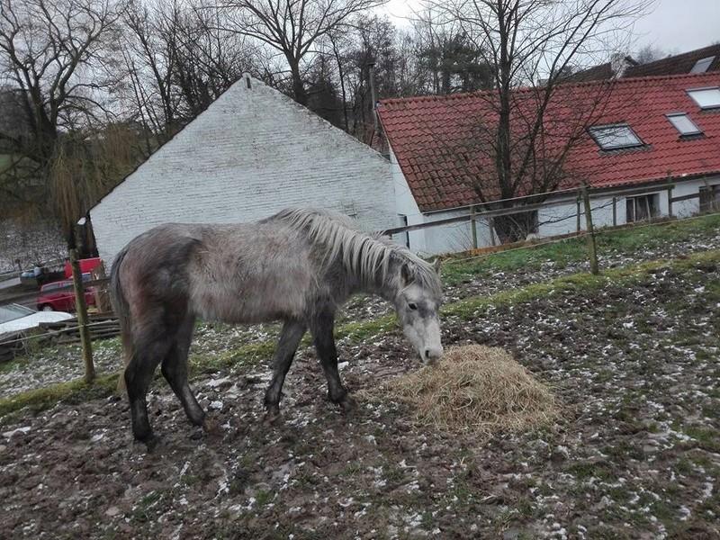 On juge vos chevaux au modèle - Page 6 27749911
