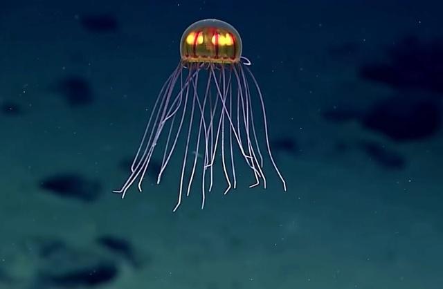 Début des campagnes de plongée profonde Meduse10