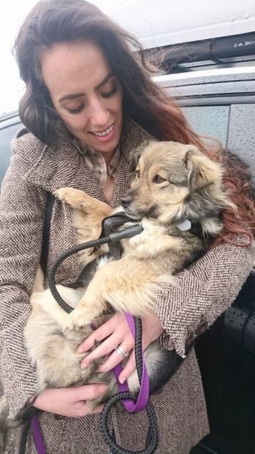Ellie (ex-Lady) - femelle - refuge de Târgu Frumos - réservée adoption en France Ellie_14