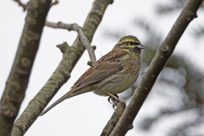 Des oiseaux du pays de Lorient _mg_4512
