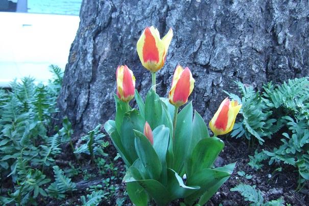 giboulées de fleurs ? Dscf4625