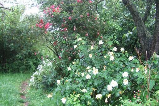les jardins sont beaux en mai ! - Page 2 Dscf5932