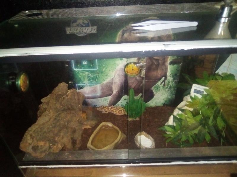 Mon gecko léopard est constipé Img_2012