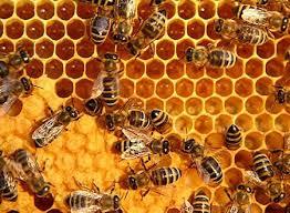 Η κοινωνία των μελισσών Eiai10