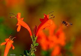 Η κοινωνία των μελισσών Ez10