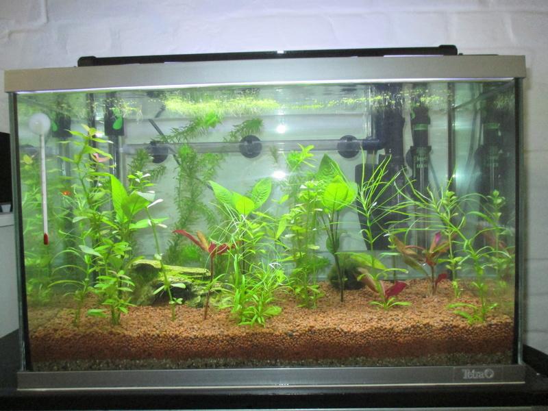 Démarrage d'aquarium de 60l, algues ! Conseils ? 2018-016