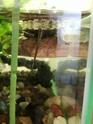 Dimension aquarium mauremys japonica adulte Img_2025