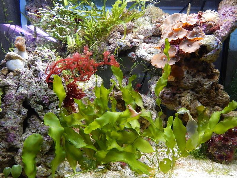 Autre Petit Jaubert, pour les Algues. Dscn9810